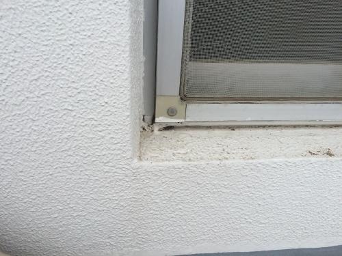 38年経過したコンクリート外壁の黒カビ